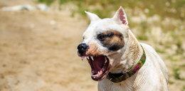 Wzmagał w psie agresję. Nieświadomie?
