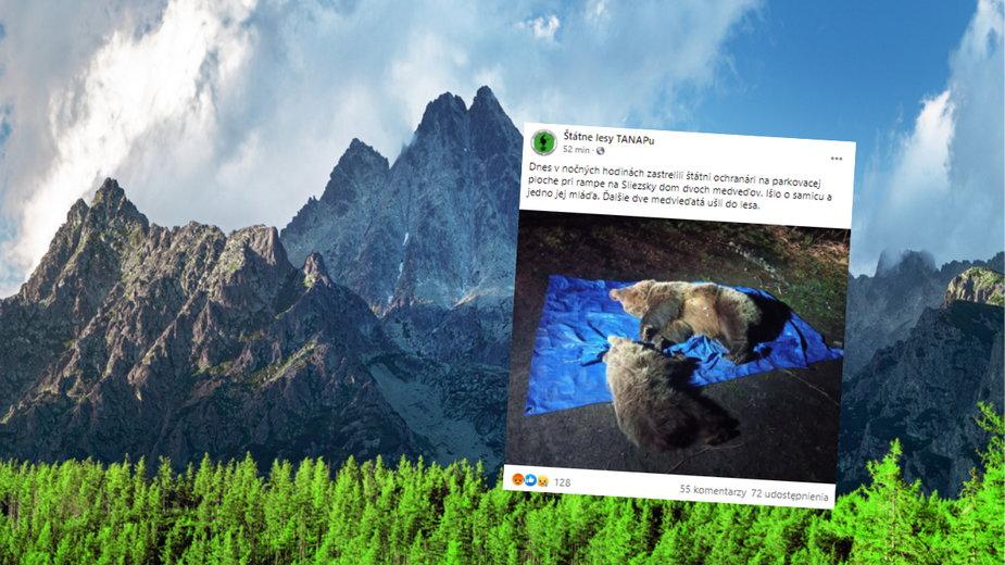 Słowaccy przyrodnicy zastrzelili dwa niedźwiedzie