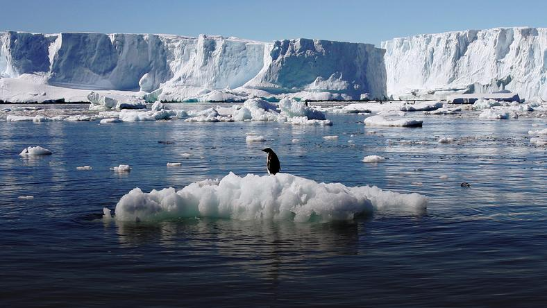 File photo of an Adelie penguin standing atop a block of melting ice near the French station at Dumont díUrville in East Antarctica