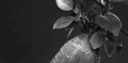 Roślina droższa od złota