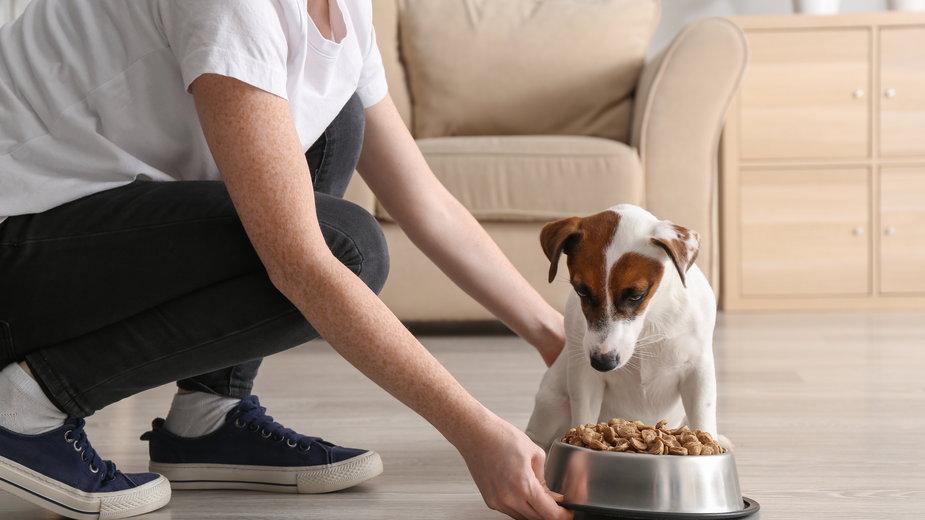 Przy niektórych schorzeniach pies powinien dostawać specjalną karmę leczniczą - Pixel-Shot/stock.adobe.com