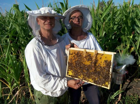 Za bavljenje pčelarstvom kao biznisom potrebno je 250-300 košnica