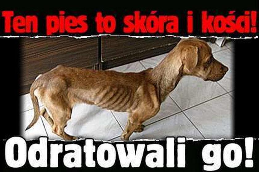 Ten pies to skóra i kości. Odratowali go!