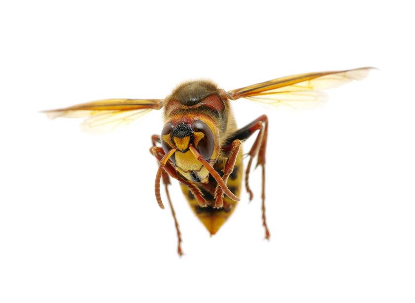 Wędkarz zabity przez owady