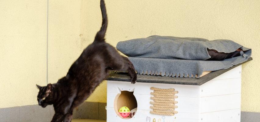 Tłuste koty z wodociągów. Bez etatu i żyją jak paczki w maśle