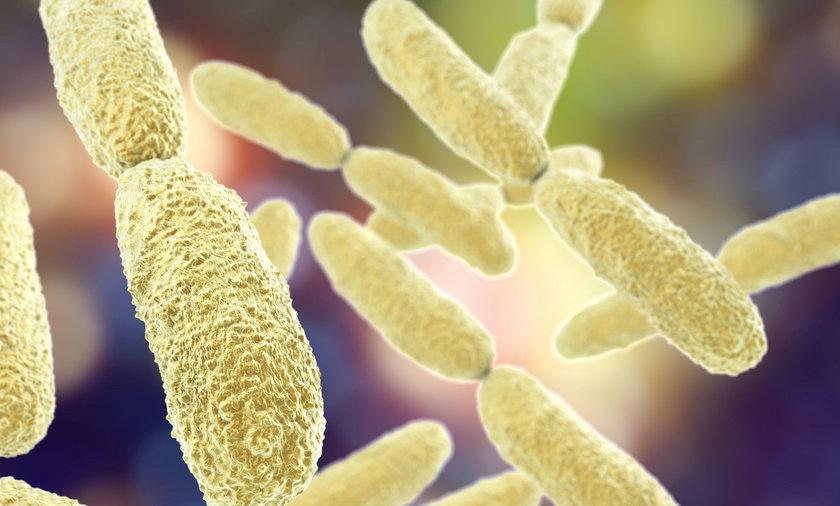Superbakteria New Delhi zbiera coraz większe żniwo w Polsce