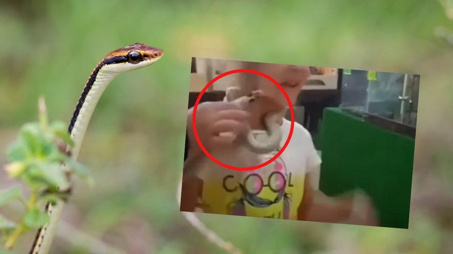 Wąż ugryzł pięciolatkę w rosyjskim zoo