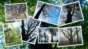 KONKURS: Wybieramy Najpiękniejsze Polskie Drzewa!