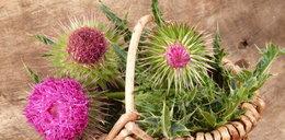 Ta roślina obniża cholesterol! Znasz ją?