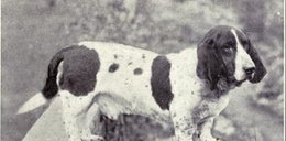 Tak zmieniły się psy przez 100 lat