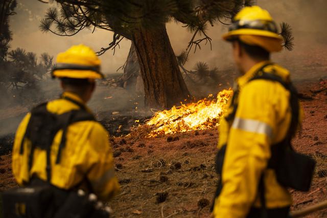 Požari u Kaliforniji - Nacionalna šuma Anđeles