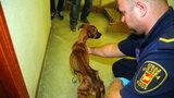 Strażnicy Animal Patrolu uratowali zagłodzone psy