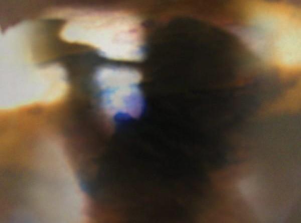 Animal Collective odrywa mroki duszy