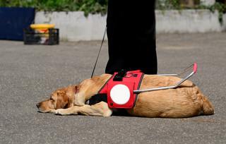 Sąd Okręgowy: Pisemne przeprosiny za niewpuszczenie niewidomej z psem do busa