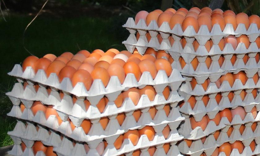 Jajka skażone salmonellą!