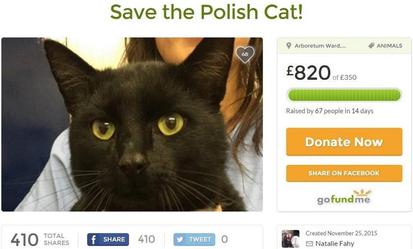 Niezwykła historia kota Polaka