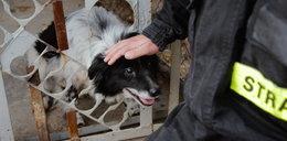 Strażacy ratują bezdomne psy