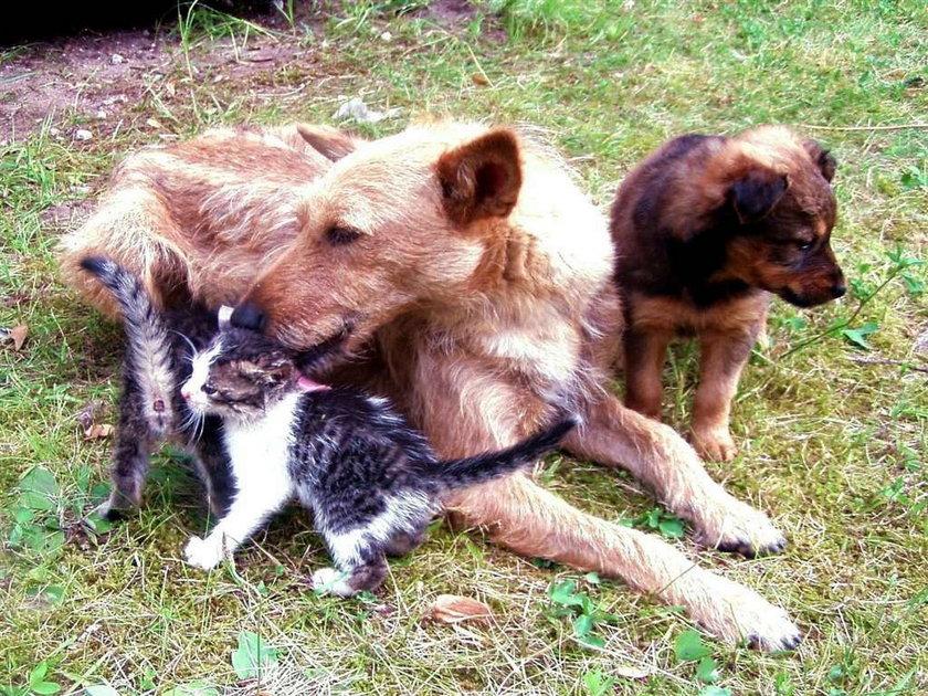 Suka wychowuje koty