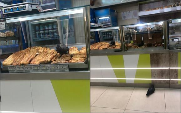 Golubovi u vitrini sa pecivima