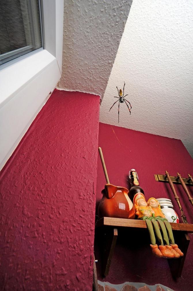 Pauk u sobi