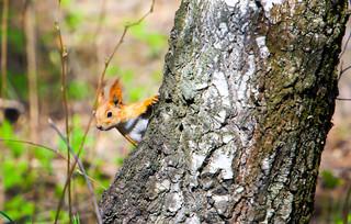 17 maja rusza program wsparcia dla właścicieli lasów prywatnych