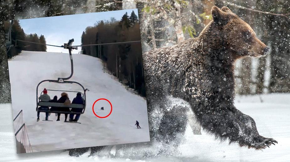 Rumunia: niedźwiedź gonił narciarza na stoku