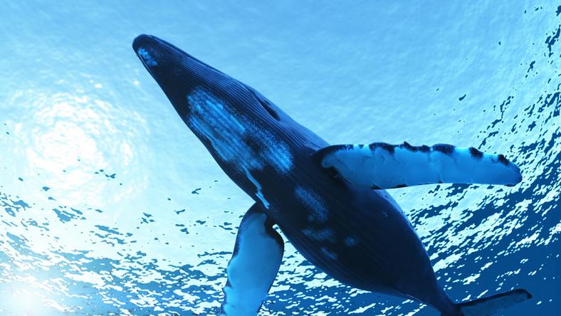 Wieloryb by się uśmiał, gdyby usłyszał, dlaczego morze jest słone...