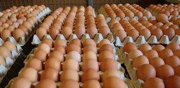 Sanepid alarmuje: kolejne jajka z salmonellą