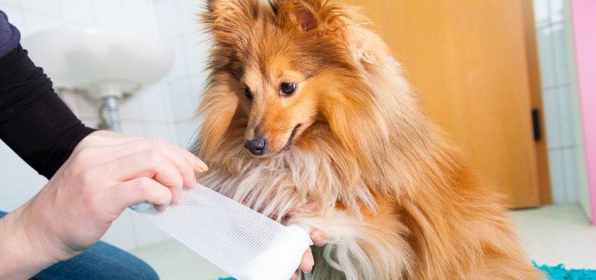 Co powinno znaleźć się w zwierzęcej apteczce? Praktyczny poradnik