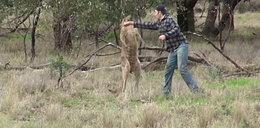 Pobił się z kangurem, bo bronił swojego psa!