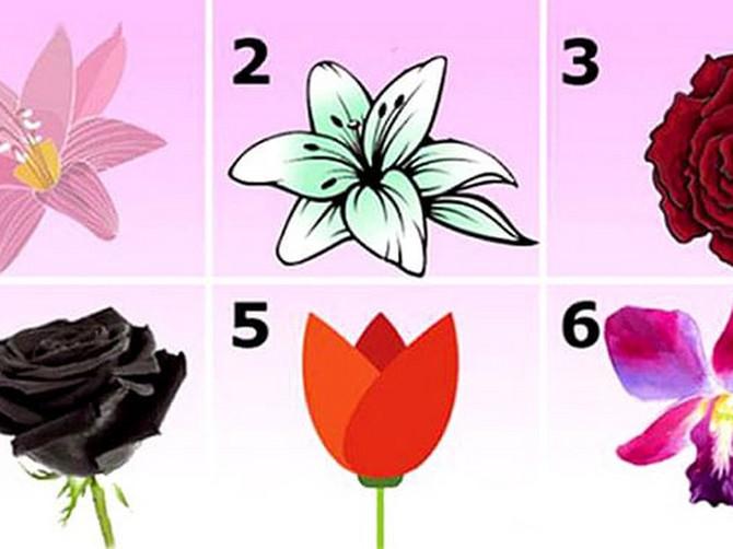 Odaberite cvet koji vas NAJVIŠE PRIVLAČI: Vaš izbor otkriće ZAPANJUJUĆU I SKRIVENU TAJNU vašeg karaktera!
