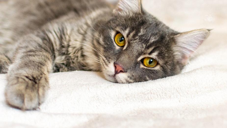 Koty niewychodzące szczególnie mocno narażone są na stres oraz nudę