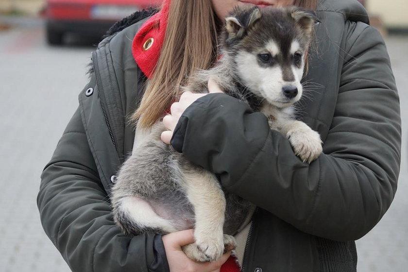 Mnóstwo zwierzaków znalazło domy dzięki Czytelnikom Faktu