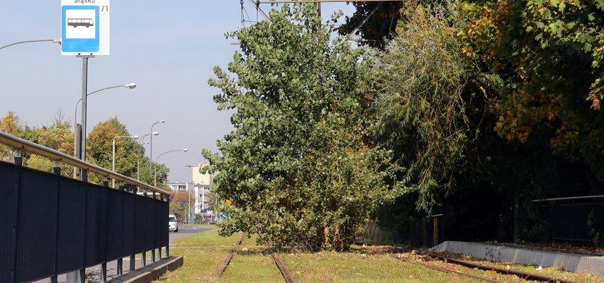 Zamiast tramwaju jest drzewo na torowisku. Miejski społecznik: - To pomnik nieudolności władz Łodzi