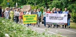 Chcą wyciąć 1327 drzew ! Jest protest!