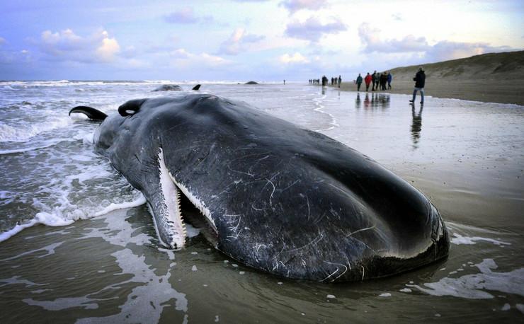 nasukani kitovi