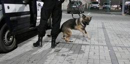 Niezwykły pies pomaga policji