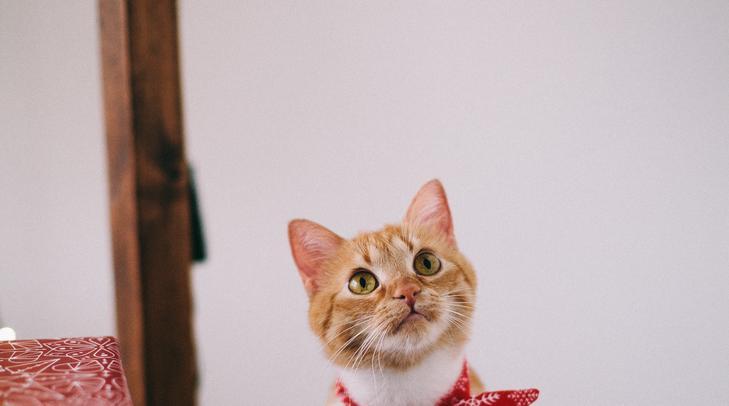 online társkereső macska