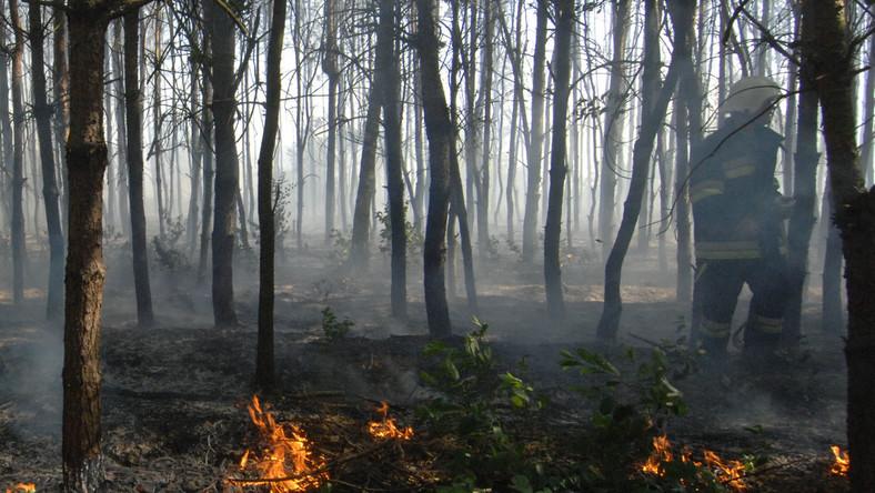 To strażak podpalał lasy i łąki