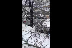 Popadale grane od tezine snega u Beogradu