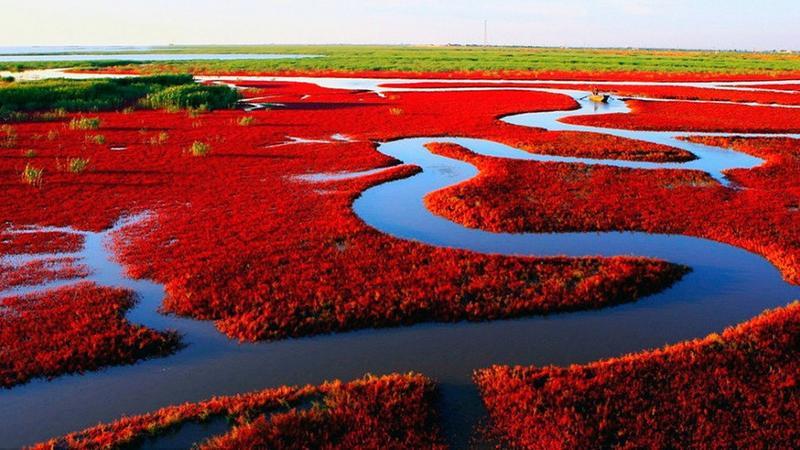 Czerwona Plaża w chińskim Panjin