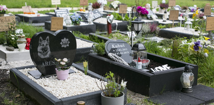 W Katowicach będzie cmentarz dla zwierząt?