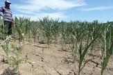 susa poljoprivreda njiva
