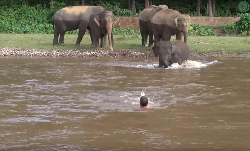 Słoń ruszył na pomoc tonącemu mężczyźnie. Piękna przyjaźń w dżungli