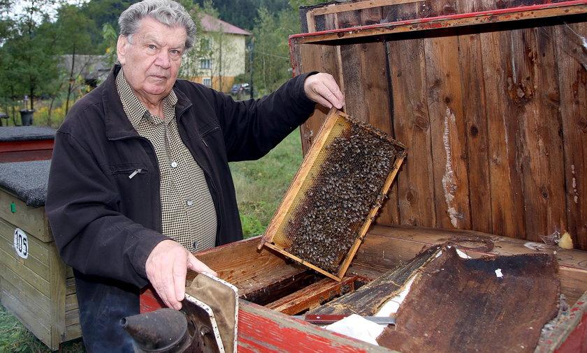 Sąd kazał zagazować pszczoły, bo przeszkadzają sąsiadom.