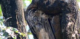 Gdzież ona się schowała! Widzisz sowę?