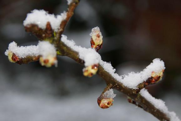 Do sada najtoplija zima u Evropi: februar u Oksfordširu