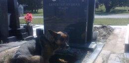 Pies zamieszkał na cmentarzu. Dlaczego?
