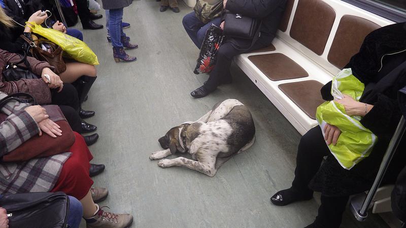 Pies w metrze