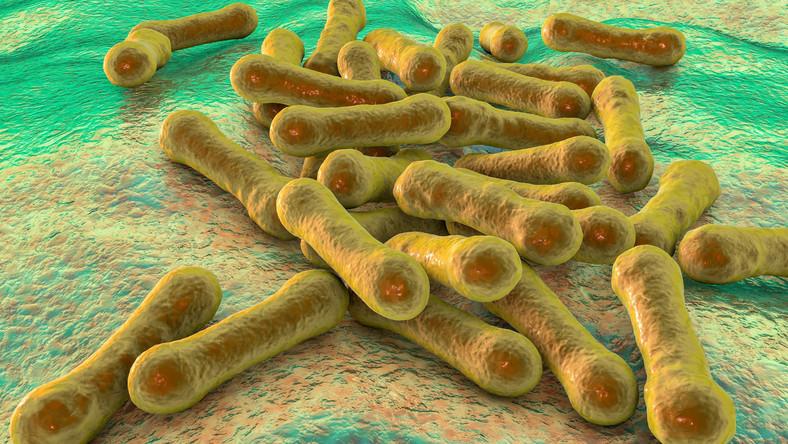 Bakterie Diphtheria, błonica